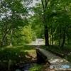 湖畔の遊歩道②
