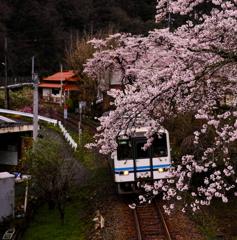 口羽駅付近の桜と三江線2017-トリミング
