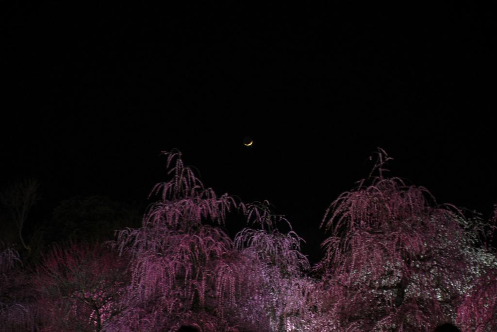 月(月齢3.5)と梅