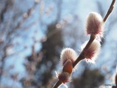 春への準備