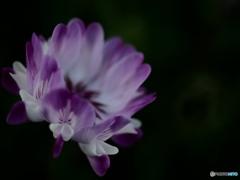 ひっそりと輝きを放つ花