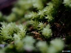 淡い緑の春