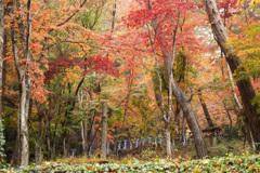 雨 の日大好き日枝神社