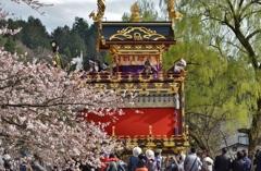 桜咲く高山祭り