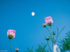 月と花のあいだに…☾❀