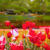 「春の花の開花リレー…其の5✾!」