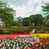 「春の花の開花リレー…✾!」