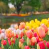 「春の花の開花リレー…其の2✾!」