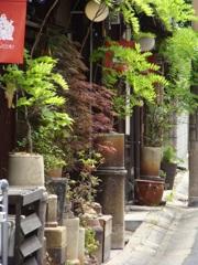 奈良町の新緑