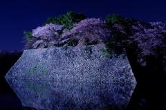 お堀の夜桜5