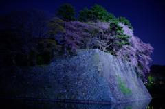 お堀の夜桜2