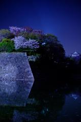 お堀の夜桜4