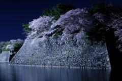 お堀の夜桜2018 3