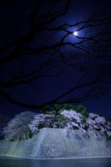 お堀の夜桜2018