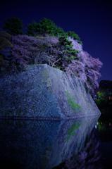 お堀の夜桜3