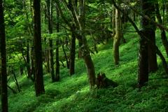 森~朝日を浴びて~。