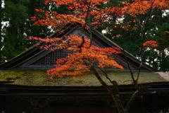 檜皮葺と紅葉。