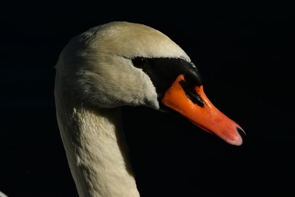 白鳥さん。