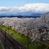 しばた千桜橋。