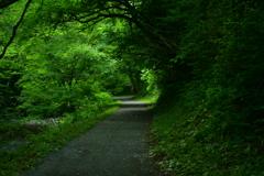 緑を歩く。
