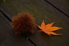 それは秋。