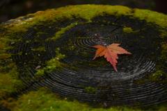 秋が告げた秋。