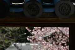 巴紋に桜。
