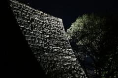 丸亀の夜。