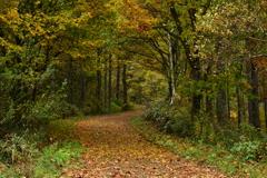 秋を訪ねて。