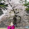 桜田門の桜とポメ
