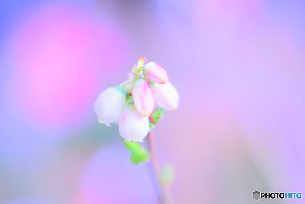 咲いた 咲いた