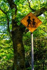 森の通学路