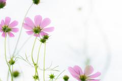 輝く花びら