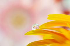 雫の中に咲く花