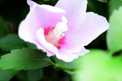 道端に咲いてた花