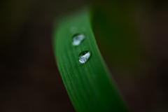 雨の残した宝石