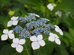 花の中にまた小さな花