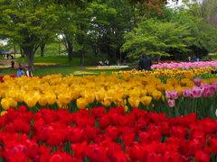 緑と黄色と赤と
