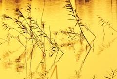金屏風に描く