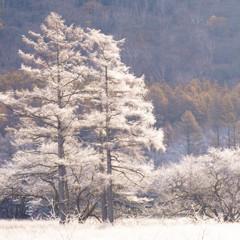 霜花ドレス
