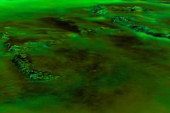 緑に染まる河川