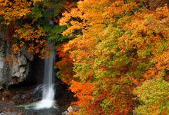 秋彩時を愛でて