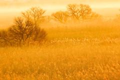 葦原の歓び