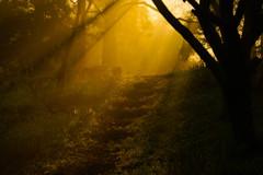 朝陽さす散歩道