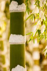 厳冬の竹化粧