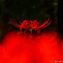 赤いドレスの女帝