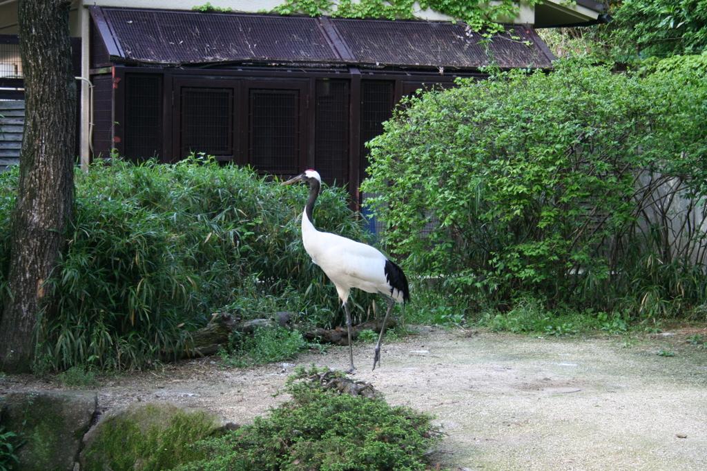 動物園の鶴(戸川利郎)