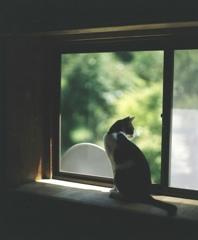 いつもの窓
