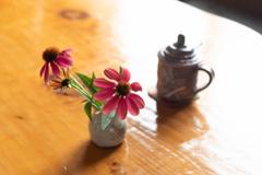喫茶店のエキナセア