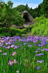 千古の家と花菖蒲